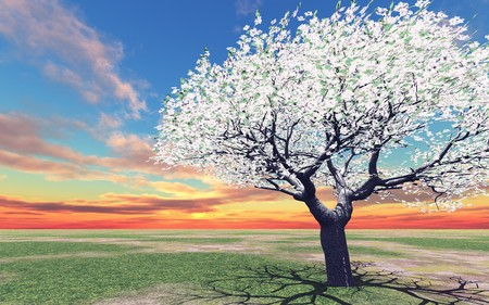 blossoming: Blossoming tree in the sunset Stock Photo