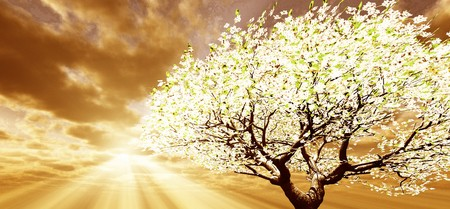 blossoming: Blossoming tree Stock Photo
