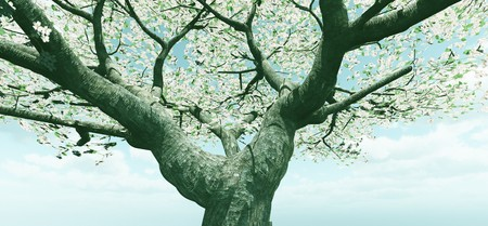 blossoming: Blossoming tree