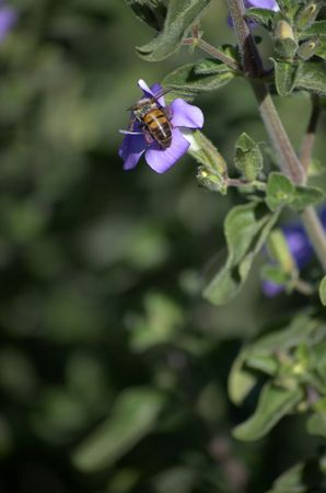Bee sitting on the flower
