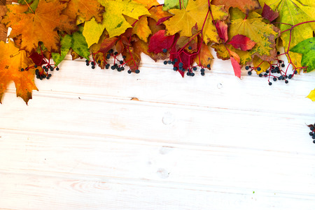 autumn background yellow and burgundy colored leaves and berries of wild grapes, chestnuts on a wooden board