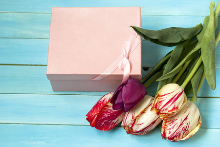 Tulips colored with a gift box on a blue wooden background