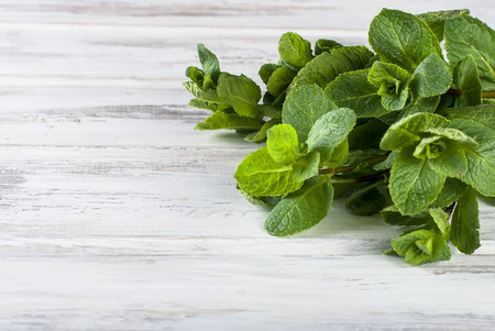 Bunch Organic fresh sprigs of mint on the white rustic wooden table