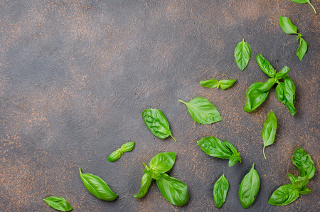 a lot of scattered green fresh basil leaves on a dark rusty old background, close up  Top view, copy space