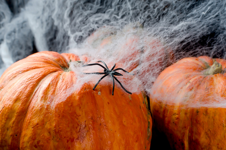 Halloween decorations,pumpkins, spider and cobweb on black background, autumn holidays concept, copy space