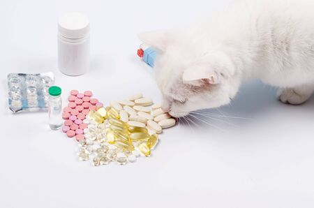The Angora white cat eats a pill. Concept treatment for cats. Vitamins or tablets for cat. Animal nutritional supplements on white. Veterinary care.