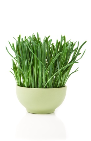 image of grass in flowerpot isolated on white photo