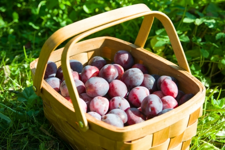 Image of basket of plums photo