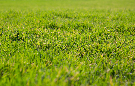 Groen gras in het zonlicht. Achtergrond, kopiëren spacefor uw tekst. Stockfoto