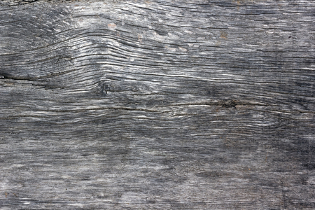 dry tree: Wood texture. old, grunge wood panels used as background. Stock Photo