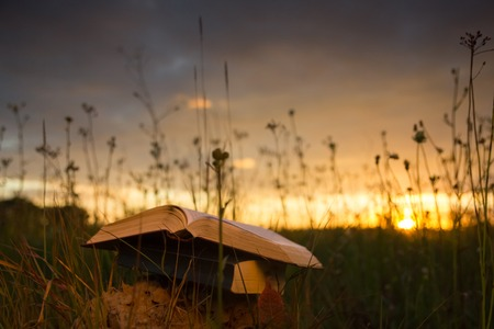 hardback: Opened hardback book diary, fanned pages on blurred nature landscape backdrop, lying in summer field on green grass against sunset sky with back light. Copy space, back to school education background.