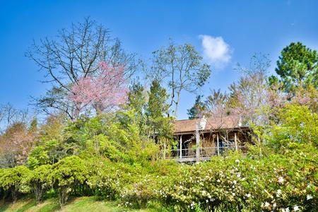 doi: Casa di riposo a Doi Ang Khang, Chiang Mai, Thailandia