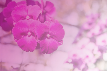 thai orchid: Beautiful Thai orchid flower Stock Photo