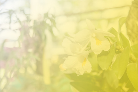 goodly: Beautiful Thai orchid flower Stock Photo