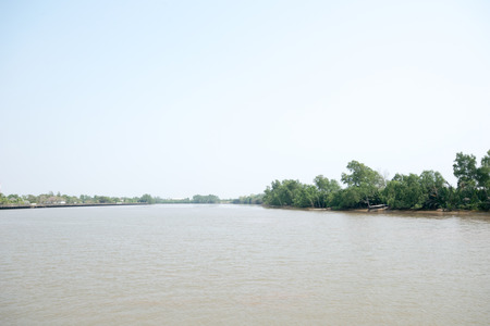 rivulet: river with mangrove trees and sky