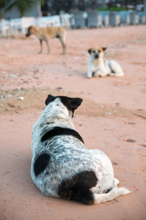 chaff: Dogs lie on the beach