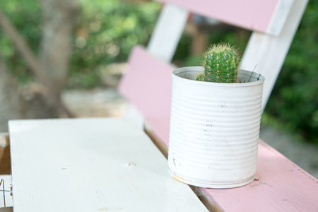Close up small cactus in a can on a wooden table Stock fotó