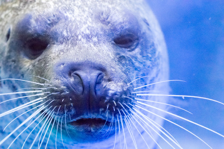 likable: Close up face of seal