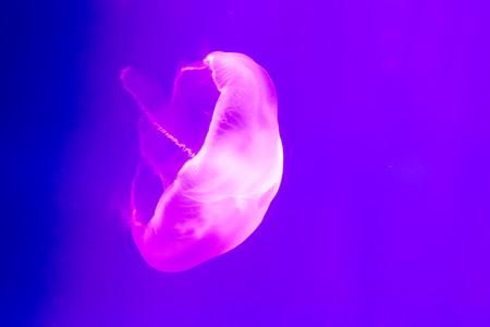 toxin: close up jellyfish Stock Photo