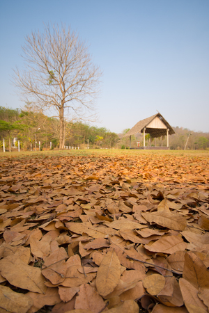 stale: fallen leaves with old pavillion background