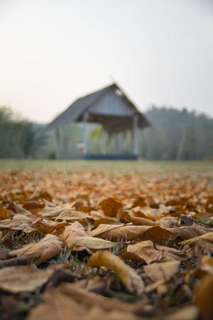 pavillion: fallen leaves with old pavillion background