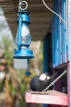 suspend: old blue metal lantern closeup