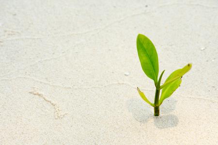 teeny: Thai small mangrove on the beach