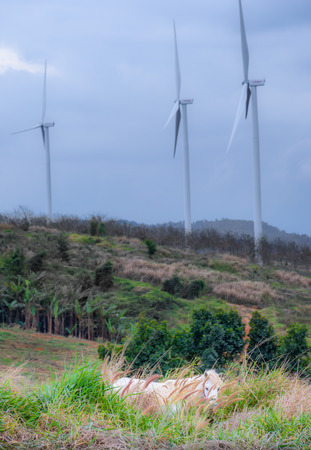 A white horse while nibble grass with wind farm background at Windtime Khaokho, Phetchabun, Thailand.