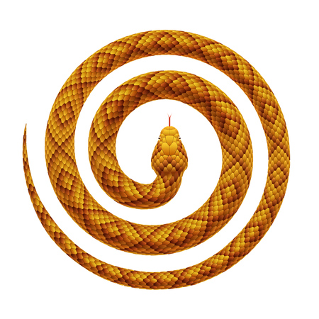 Vector realistic illustration of a tropical snake curled into a spiral shape. Serpent coiled with a head in the center, isolated on a white background.