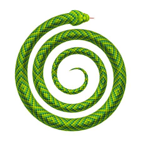 Serpent enroulé en forme de spirale. Serpent tordu en hélice. Illustration réaliste de vecteur isolé sur fond blanc.