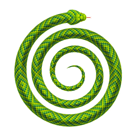 Snake rolled up into a spiral shape. Serpent twisted into a helix. Vector realistic illustration isolated on a white background.