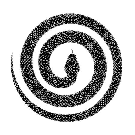 Schlange, die sich zu einer Spiralform zusammenrollt. Tattoo-Design. einer Schlange, die mit dem Kopf in der Mitte zusammengerollt ist. Vektorillustration lokalisiert auf einem weißen Hintergrund.