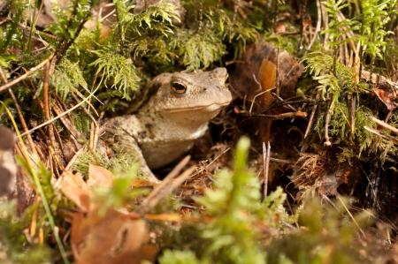 eyes cave: marsh frog