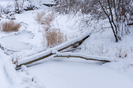 frigid: frozen river in the forest of felled trees and ice