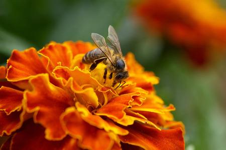 花のクローズ アップに蜂
