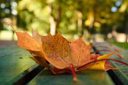 Autumn leaf on a wooden bench in the park, red maple leaf, Morning in the Park, Autumn mood, Fall, Autumnal Park, Fall vibes, Wooden benches in a park, Autumn landscape Stock Photo
