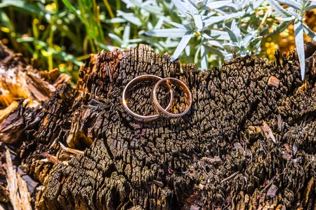 colorado mountains: wedding rings on a tree stump old