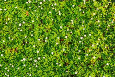 White flowers and green grass texture top view stock photo picture stock photo white flowers and green grass texture top view mightylinksfo