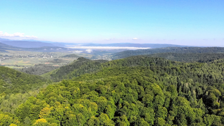 Dronefootge Flight over the green forest on a sunny day
