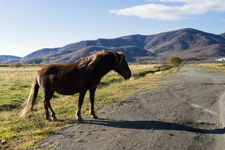 Black horse stays close to the road. Mountains and grass field are on a background. Stock Photo