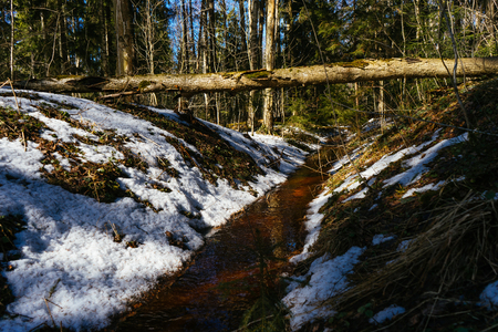 Early spring landscape of the snow in the forest. Yellow dirty river runs through wood landscape. Melting snow on the ground in the woods on a sunny day in early spring. Fallen tree is over river.