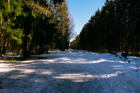 Spring landscape. Early spring in the pine forest, the snow in not melted everywhere and its covered by thin crust of ice. Melting snow on the road in the woods on a sunny day in early spring.