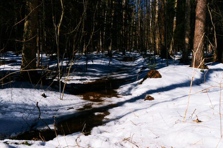 Early spring landscape of the snow in the forest. Yellow dirty river runs through wood landscape. Melting snow on the ground in the woods on a sunny day in early spring.