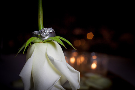 Wedding rings on a rose stem