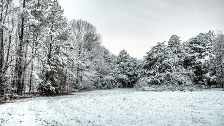 Winter scene of snow on a field and trees