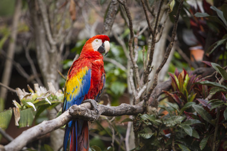 Macaw bird perched on a branch in a jungle Фото со стока