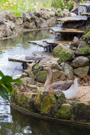 Goose seated by a serene pond on a summer day