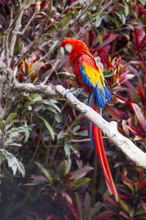 Macaw bird full length side profile while perched in a tree