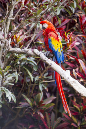 Macaw bird full length side profile while perched on a branch