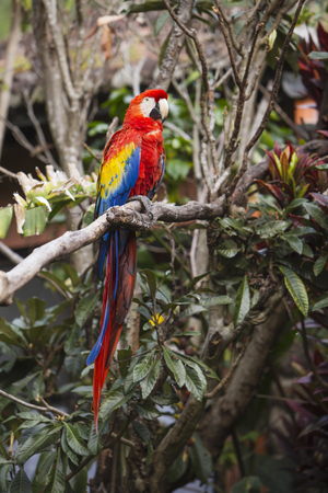 Full length of a macaw bird sitting in a tree in the jungle